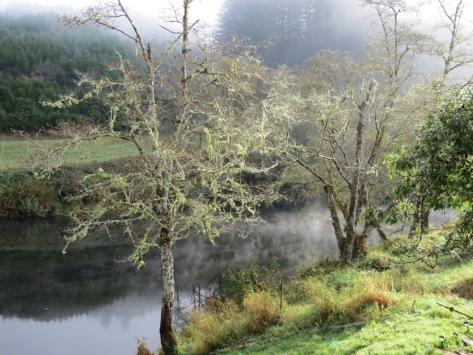 Alsea River Fog