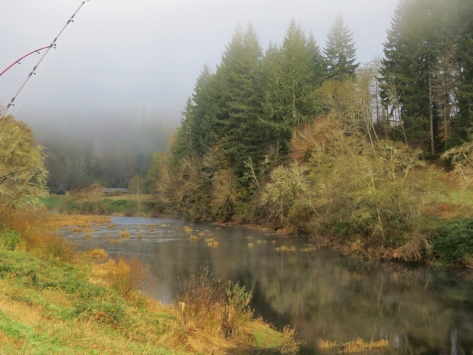 Coastal Fog on the Alsea River