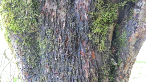 Bear claw marks on the tree