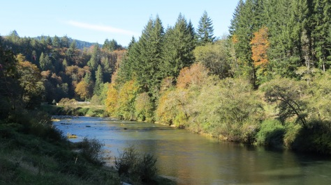 Fall Colors on Alsea River
