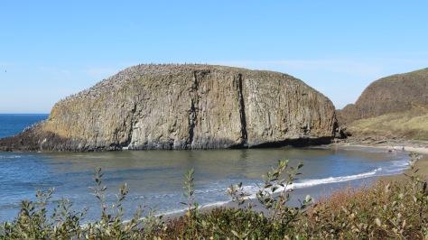 Seal Rock Pelican Migration