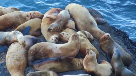sea lion hug