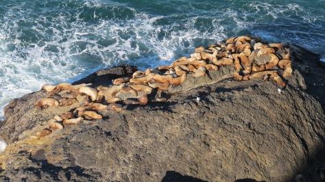 Sea Lion Rock at Heceta Overlook