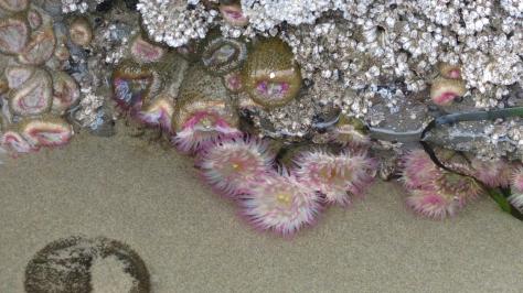 Aggregating Anemones