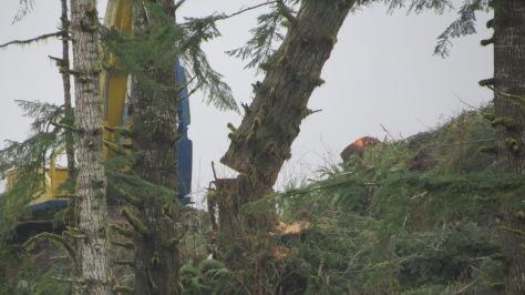 Logging-Falling