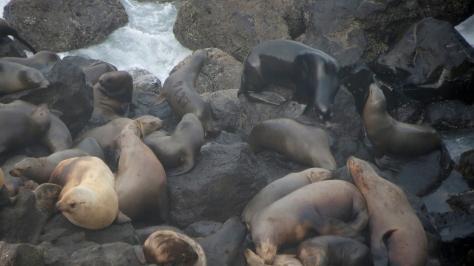 Sea Lion branded: 412Y