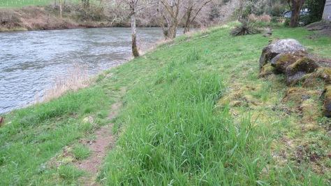 alsea riverbank