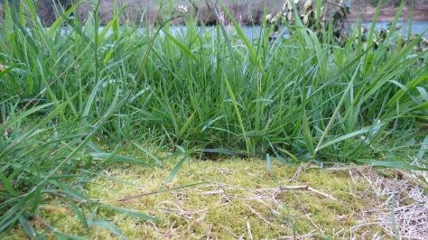 Moss vs Grass