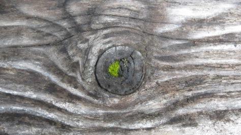Naughty Moss