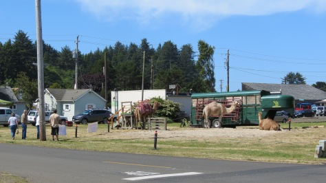 camels in waldport