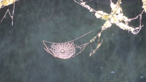 spiderweb suspended in mid-air