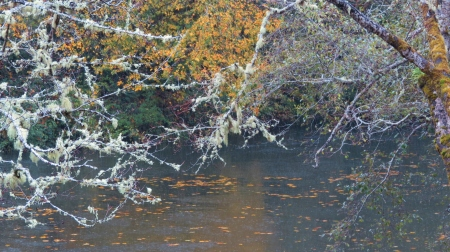 fall colors alsea river