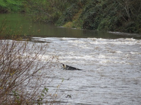 submerged boat in alsea river