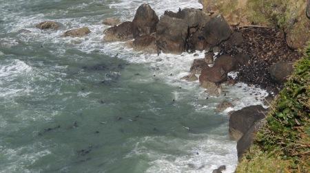 sea lion haul out