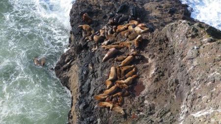 sea lion rock climbers