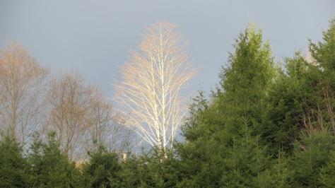 glowing tree