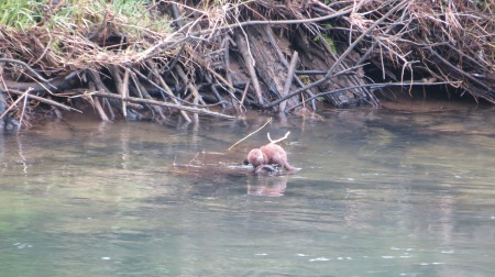 mink fishing in alsea river