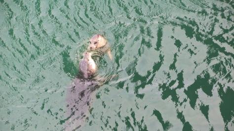 Harbor Seals in Alsea Bay