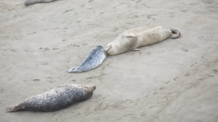 seal mom and pup nuzzle