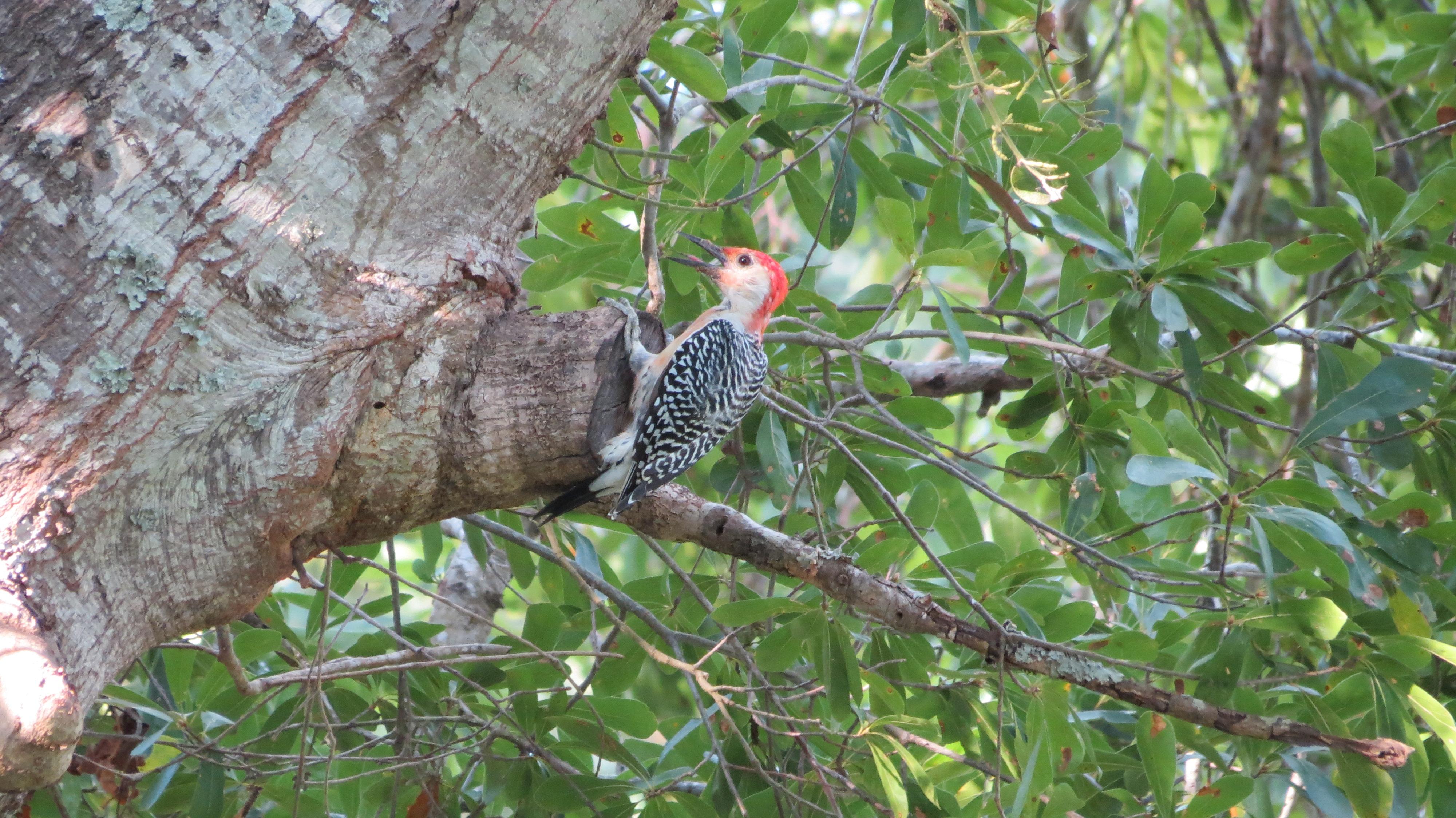 Backyard Birds of East Texas | Pamperingcampers Blog