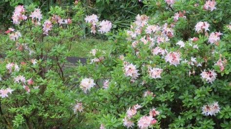 Honesuckle-flowers