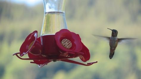 hummer-flight-1